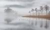 Loch Ard (Billy Currie) Tags: scotland aberfoyle loch ard lake mist fog water trees dawn trossachs national park ducks birds swim