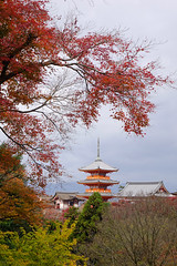 Kiyomizu-dera Temple in Kyoto, Japan (phuong.sg@gmail.com) Tags: ancient architecture asia autumn beautiful buddhism buddhist color culture dera drought fall famous green heritage historic historical japan japanese kansai kiyomizu kiyomizudera kyoto landmark leaf leaves mountain nature old pagoda red religion religious samurai season shinto shrine sky spring temple tourist travel tree yellow