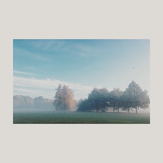 Morning mist, Tooting Common