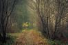 Autumn Mist (Netsrak) Tags: europa europe forst natur nebel wald fog forest mist nature woods baum bäume