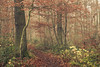 A Day in the Woods (Netsrak) Tags: baum bäume eifel europa europe herbst landschaft natur nebel wald autumn fall fog landscape mist nature woods