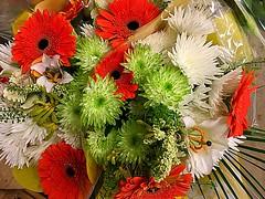 #HappyWeekendEveryone (RenateEurope) Tags: happyweekendeveryone flora flowers awesomeblossoms gerbera chrysanthemen lilien 2017 iphoneography renateeurope