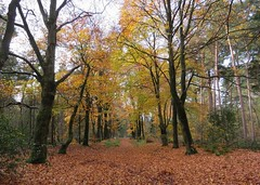 Only two weeks ago: it seems a different world (Elisa1880) Tags: maarn utrecht nederland netherlands autumn herfst trees bomen doorn