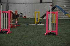 DSC_6609 (jaimekay16) Tags: dog agility k9x k9 xpress leander texas