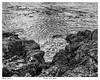 Rocks and Kelp (wynb1) Tags: wynbunston blackwhitephotos blackandwhite blackandwhitephotos bw bwwater bwriver seablackandwhite sea rocks bwrocks ocean bwocean