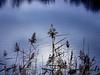 blue (Darek Drapala) Tags: blue warsaw warszawa water panasonic poland polska panasonicg5 reflection reflects sun sky silhouette waterscape lumix light nature natural