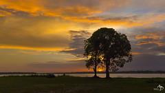 Amazonia Sunset (alain_did) Tags: osondagse guyane amazonie fleuve berge reflets maroni saintlaurentdumaroni tourisme evasion outdoors naturallight frenchphotographer nature landscape