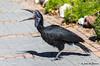 (JOAO DE BARROS) Tags: joão barros bird
