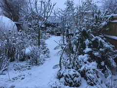 Snow is Here - unedited (basswulf) Tags: ipadpro unmodified 43 image:ratio=43 permissions:licence=c 20171210 201712 4032x3024 snow garden backgarden normcres oxford england uk