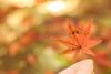 もみじ (mizuk@) Tags: japan gifu autumn maple leaves colorful canon 岐阜 美濃 もみじ谷 紅葉