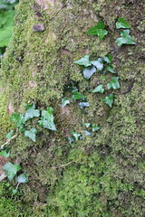 IMG_3170 (avsfan1321) Tags: connemaranationalpark connemara nationalpark ireland countygalway green lush landscape plants moss