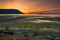 SEASIDE SUNRISE (Sandy Hill :-)) Tags: seascape landscape sunrise beach sandybeach seaweed ocean water seaside scenicview saltspringisland vancouverisland bc sunny sandyhillphotography