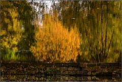 DSC_0004  - 'Fall' in the canal (SWJuk) Tags: swjuk uk unitedkingdom gb britain england lancashire burnley home canal leedsliverpoolcanal finsleywharf water still calm reflections trees bushes 2017 nov2017 autumn autumnal autumncolours flipped colourful gold green nikon d7100 nikond7100 18300mm rawnef lightroomclassiccc