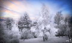 ~~~~  winter romance ~~~ (jmb_germany) Tags: