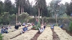 permaculture-class-garden (santacruzpermaculture) Tags: gardening organic garlic planting compost raisedbeds pdc experientiallearning permaculture class course