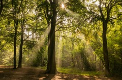 Shower of sunbeams (Mariannevanderwesten) Tags: sunbeams zonnenstralen autumn herfst bos visdonk morninglight ochtendlicht nature natuur nikon roosendaal bomen