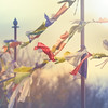 Prières au vent (leeleeque) Tags: acontretemps angetraverso drapeaux saleve hautesavoie sigm105macro rhonealpes sunset light alpes alps automne automn art bokeh canon canon600d france lumière macro méditation yoga randonnée travel trekking tourisme bouddha bouddhisme voyage vue zen