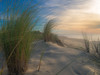 Forces (Quasqua) Tags: plage vegetation beach atlanticocean coast wind cloud sand orton effect colors 500px nature forces france nouvelleaquitaine aquitaine landscape sealandscape breathtaking