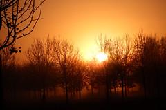 Zonsopkomst 17112017 2 (megegj)) Tags: gert zonsopkomst sunrise herfst
