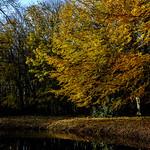 Autumn reflections thumbnail