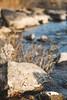 (adamwilliams4405) Tags: richmond rva richmondva river urban canon virginia visitvirginia visitrichmond va loveva nature colors landscapes fall explore water