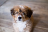 DSCF7861 (aaroncaley) Tags: vietnam ninhbinh animal dog puppy