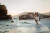 11/12 Nora, special dog. (shila009) Tags: perro nora dog roughcollie sea playa november 1112 beach sunset skye atardecer rocks rocas 12monthsfordogs17