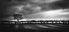 Primus inter pares (Matthew Johnson1) Tags: drama primusinterpares latin first hedge outdoor blackandwhite skyline alone tall reaching different hidden light sunlight ridges sidelight minimal