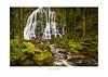 Nelson Falls - Tasmania (dominicscottphotography.com) Tags: australia tasmania nelsonfalls waterfall waterfalls water longexposure dominicscott sony a7rmii ilce7rm2 gmaster sel2470gm leefilters manfrotto