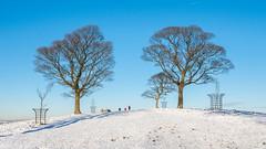 The route to Lyme Cage (Maria-H) Tags: stockportdistrict england unitedkingdom gb trees snow winter lymepark lymecage disley cheshire uk olympus omdem1markii panasonic 1235