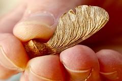 Worn (AngharadW) Tags: nails whorls veins dof fingers angharadw fingertip macromonday fingertips