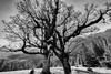 Tree Art (**capture the essential**) Tags: 2017 ahorn backlight backlit berge bäume farbdominanz gegenlicht kleinerahornboden landschaften maple mountains sky sonne sonye1018mmf4oss sonynex7 sun trees wetter blau monochrome schwarzweiss