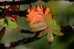 Pure Autumn (petrk747) Tags: autumn autumnofnature foliage autumnfoliage forest outdoor nature naturebynikon