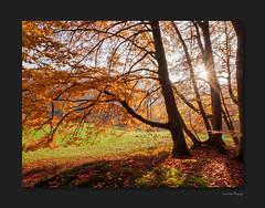 autumn-colour-blast (OdenWALDfotograf) Tags: wald forest autumn herbst fall golden colours bunt herbstfarben hessen odenwald