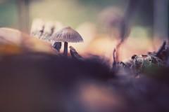 in da hood (christian mu) Tags: mushroom nature bokeh autumn germany muenster münster christianmu sonya7ii sony 9028g 9028 90mm macro pilz