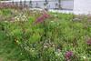 Květná zahrada, 1665–1675 (Anita Pravits) Tags: blumengarten blumenwiese czechrepublic garten kremsier kroměříž květnázahrada mähren südmähren tschechien tschechischerepublik garden českárepublika