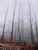 Ein Platz zum Verweilen auf der Nebelbank? (Antje_Neufing) Tags: reinsfeld nebel wald bank parkplatz rösterkopf hunsrück kell baum november ruhe pause break silence allone allein einsam