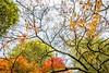 Westonbirt-1505 (Claire Louise Carroll) Tags: acers arboretum autumn colour fall leaves maples seasonal seasons sky trees westonbirt