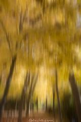 Fuentes del Marques_ 26112017-134-Editar (Pyass2015) Tags: caravaca fuentesdelmarques bosque forrest landscape parque murcia autum otoño