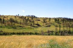 Fire13.tif (NRCS Montana) Tags: fire forestfire babydeanfire