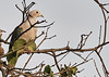 Birds in Backyards - Pamunuwa (OM-Digital) Tags: srilanka colombo birding urbanwetland wetlandbirds 2017 tourofsrilanka birdinginsrilanka birdsinbackyards homesweethome relaxing balcony olympus omd em111 300mm f56 mft handheld highiso green