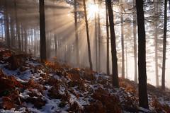 Shining Through (Hector Prada) Tags: bosque niebla nieve bruma luz hojas otoño árbol mágico forest frozen fog mist snow light magic morning sun sol enlightened enchanted sunbeams tree paísvasco basquecountry