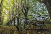 (Kekko2012) Tags: volterra sedia rotelle canon strada foglie autunno pisa