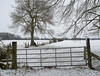 Stadhampton winter (Bruce Clarke) Tags: olympus landscape winter cloudy lumix vario rural cold m43 grey stadhampton outdoor muted omdem1 panasonic1235mmf28 oxfordshire overcast snow trees tree branches