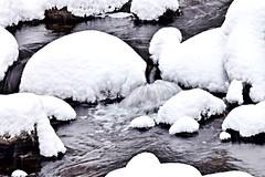 After the First Major Snow, Toronto Botanical Garden, Toronto, ON (Snuffy) Tags: snow winter seasons torontobotanicalgarden edwardsgardens northyork donmills toronto ontario canada