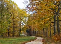 Herbstwald (November) (david_drei) Tags: farben weg dresdnerheide dresdenerheide color autumn fall yellow