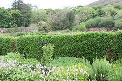 IMG_3244 (avsfan1321) Tags: kylemoreabbey ireland countygalway connemara green garden