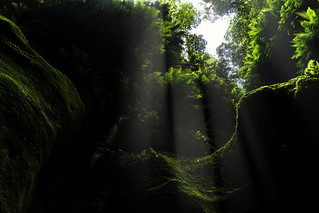 The Forest Above