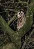 Tawny Owl (ukmjk) Tags: tawny owl staffordshire nikon nikkor d500 300mm pf vr bird night sb900