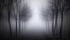 Follow Me (EmeraldImaging) Tags: richmond richmondnsw richmondlowlandsnswsydneysunriseaustralialandscapefogfoggytreessunaustralianaustralian richmondlowlands sydney nsw australia australian australianlandscape fog trees clouds sunrise sunset landscape laneway blackandwhite bw